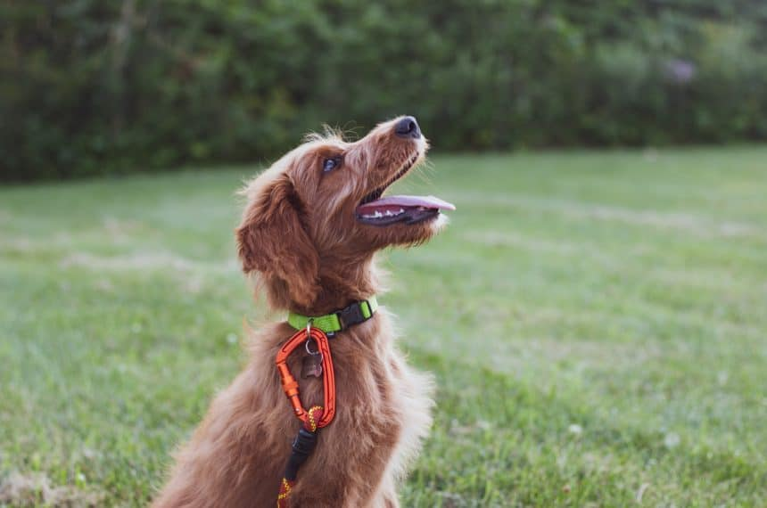 Training tools/Kennel tips-Puppy Products and Tips